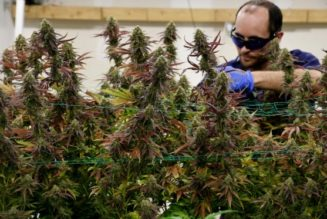 colorado-hopes-to-make-cannabis-industry-more-eco-friendly-by-recycling-breweries'-carbon-dioxide
