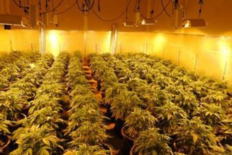 police-found-more-than-1,400-marijuana-plants-inside-a-building-in-northern-california