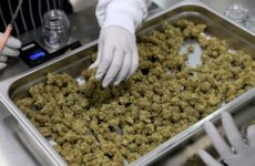 cannabis-dispensaries-are-'essential'-businesses-in-san-jose-during-coronavirus-lockdown,-city-says