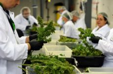 denver's-marijuana-businesses-lack-diversity-in-ownership-and-employment,-city-study-finds