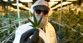 November marijuana sales push Colorado's industry to $2 billion annually for the first time