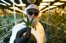 colorado-marijuana-sales-hit-$2.2-billion-in-highest-selling-year-yet