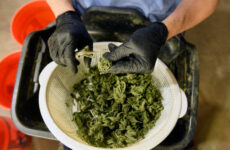 system-crash-snarls-dispensary-sales-on-4/20,-the-biggest-marijuana-holiday-of-the-year