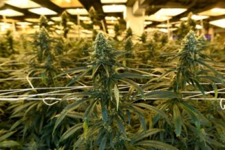 colorado-lawmakers-want-to-stop-employers-from-firing-people-for-using-weed-in-their-personal-time