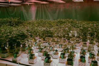us.-leads-in-cannabis-innovation,-but-cedes-global-market-to-canada