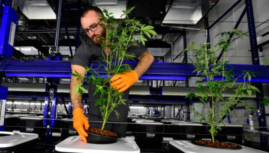 colorado's-average-price-of-wholesale-marijuana-hits-3-year-high-after-record-spike