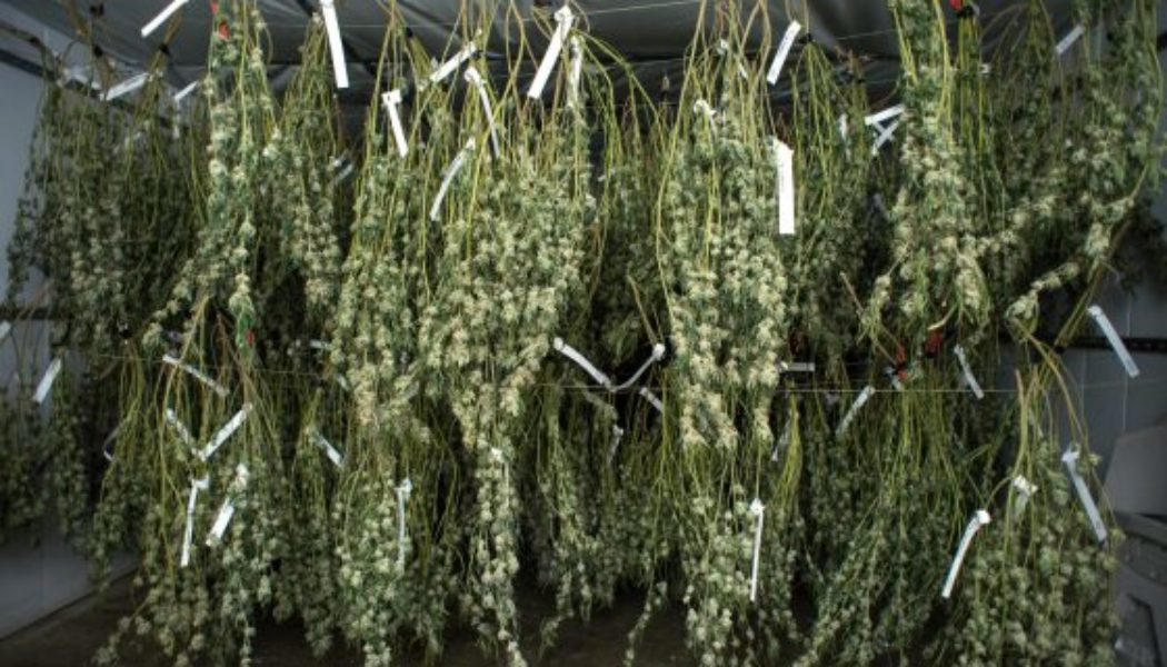 newsom's-budget-calls-for-changing-how-california-regulates-its-cannabis-industry