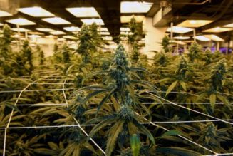 colorado-won't-stop-employers-from-firing-workers-for-using-weed-off-the-clock