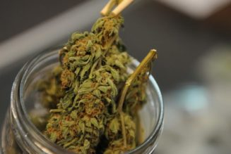 first-in-colorado-medical-marijuana-delivery-coming-to-boulder-this-spring