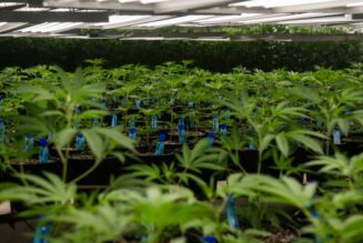 aurora-says-yes-to-recreational-pot-delivery-in-colorado's-third-largest-city
