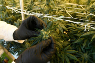 marijuana-delivery,-social-equity-reform-and-other-colorado-cannabis-trends-to-watch-in-2021