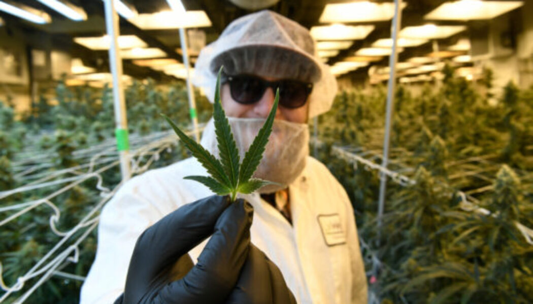 november-marijuana-sales-push-colorado's-industry-to-$2-billion-annually-for-the-first-time