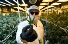 denver-could-soon-allow-weed-delivery,-plus-more-recreational-shops-and-consumption-clubs