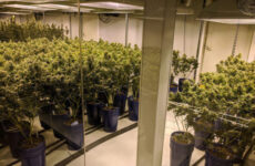 denver-to-issue-new-cannabis-business-licenses-but-not-in-some-neighborhoods
