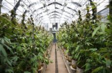 aurora-reverses-itself-on-pot-hospitality-measure-when-second-vote-comes-up-short